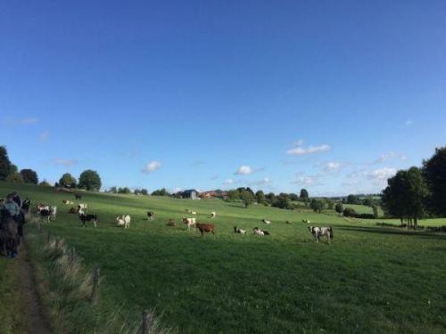 prachtig Limburg